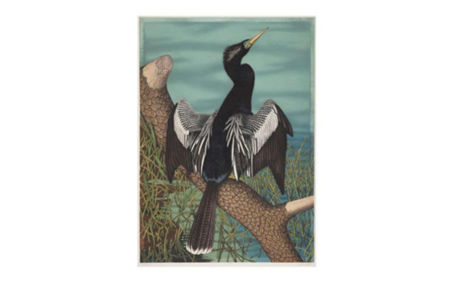John James Audubon, Black-bellied Darter (common name: Anhinga), pl. 316, lithograph from the 1971 Theatrum, Orbis Terrarum, Amsterdam
