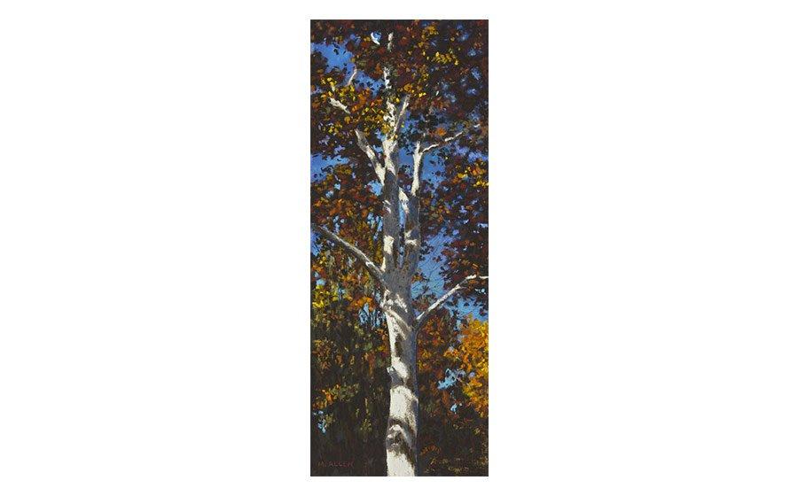 Autumn Sycamore, pastel