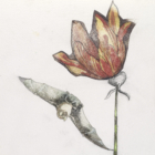 Ginny Ruffner, Lacertus vespertilio (Flapping lizard bat flower), 2017, watercolor, pencil, and image  transfer on paper. 13 x 9 in. Collection of the artist. Photo by Gene Young.